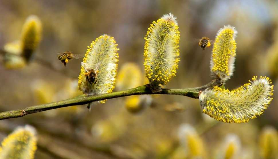 bees-2142571_1280