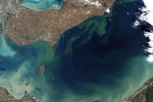 750px-Toxic_Algae_Bloom_in_Lake_Erie.jpg