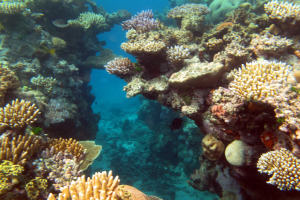 Great_Barrier_Reef_008_5387514565.jpg