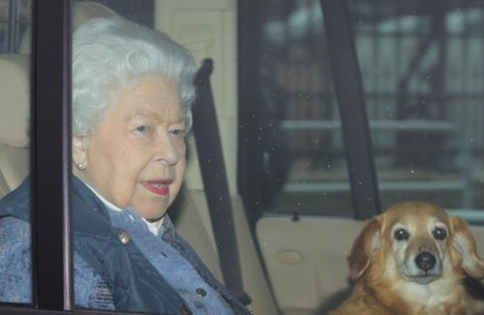 Elpusztult Vulcan, Erzsébet királynő kutyája